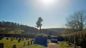 Tree surgery, Dulverton cemetery